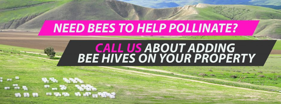 bees pollinate