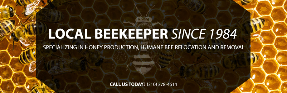 Local Beekeeper since 1984 specializing in honey production, humane bee relocation and removal. Call Us Today!