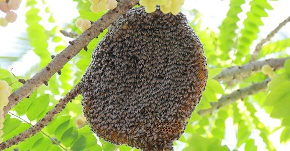 Bee Control Redondo Beach CA